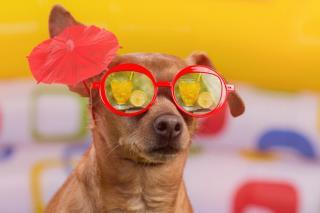 chien chaleur canicule