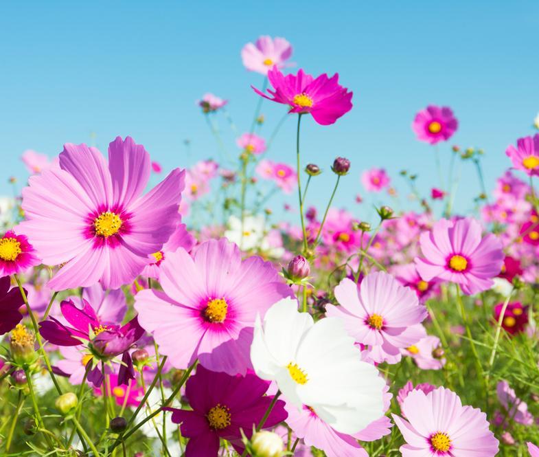 fleurs pour jardin naturel sauvage