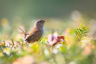 nourriture pour attirer oiseau jardin