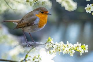 oiseau jardin