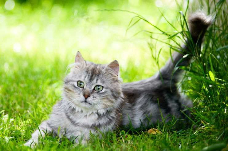 chat chasseur chasse