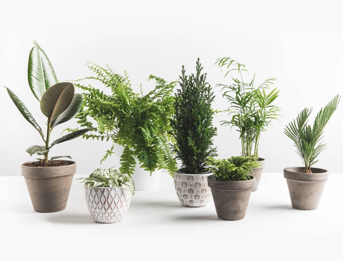 pouvoir depolluant plante