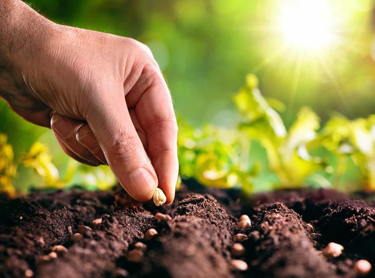 semis plantation potager ete