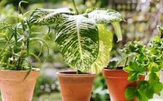 hivernage plante verte interieur hiver