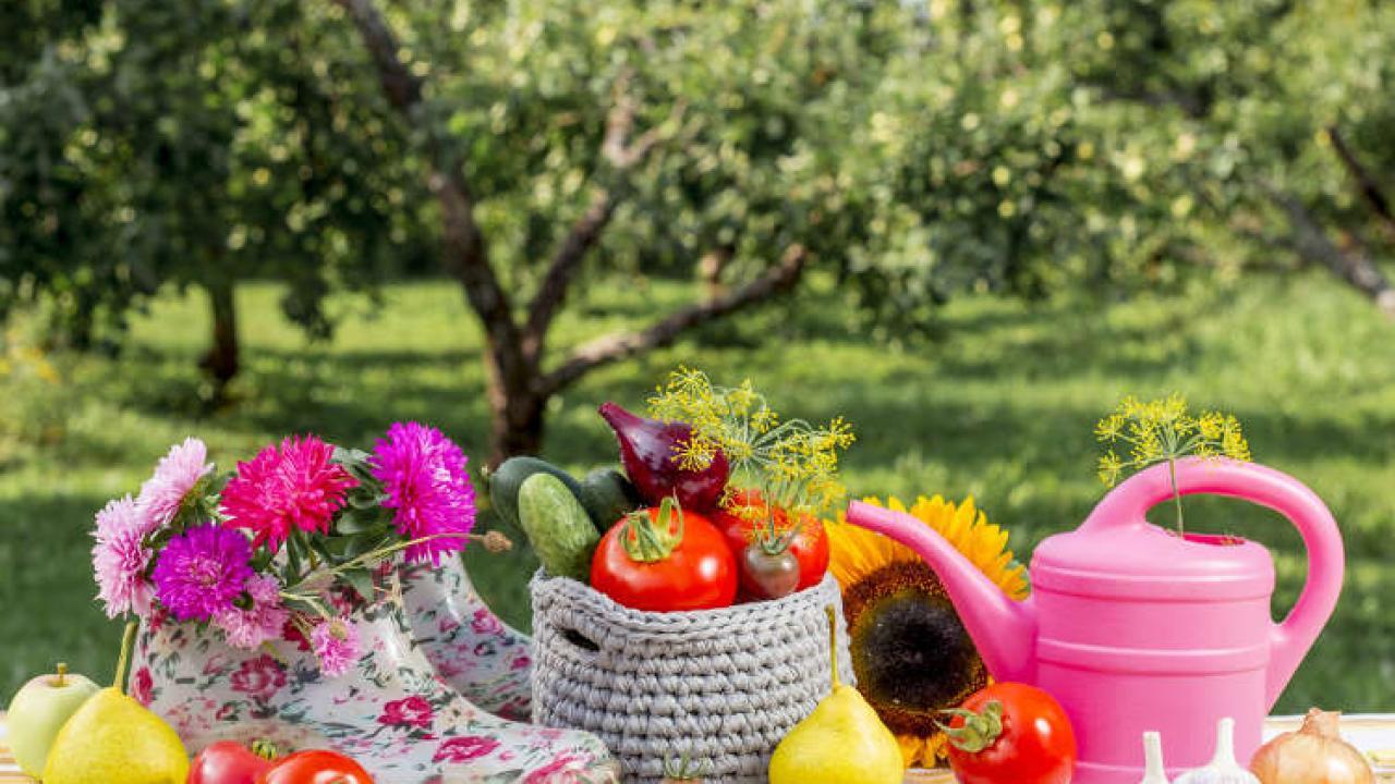 Quoi Mettre Au Potager En Septembre septembre au jardin : quels travaux de jardinage