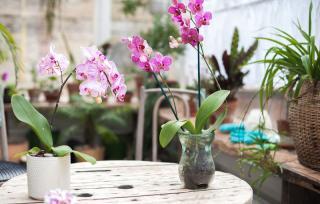 orchidee ete