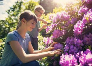 rhododendron entretien