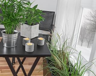 plante verte interieur hiver