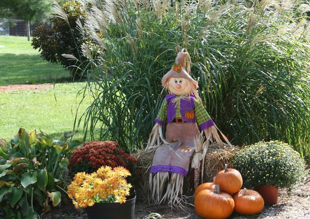 Jardinage Novembre