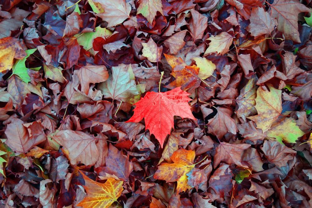 des feuilles mortes pour fertiliser