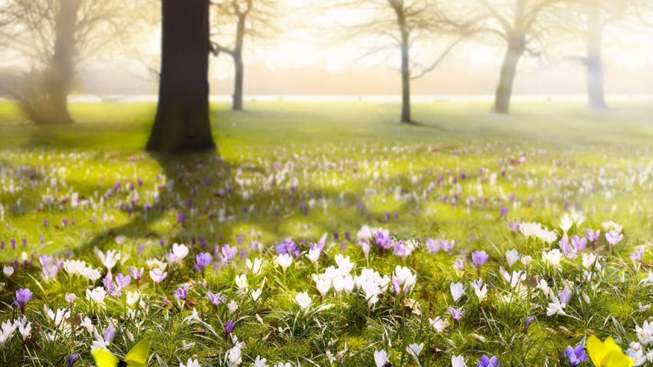 Quelles Fleurs Planter Fin Aout fleurs à planter en hiver : des idées de plantations