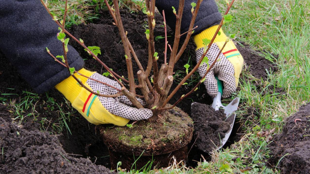 Quelle Salade Planter Maintenant plantation : technique et période pour bien planter
