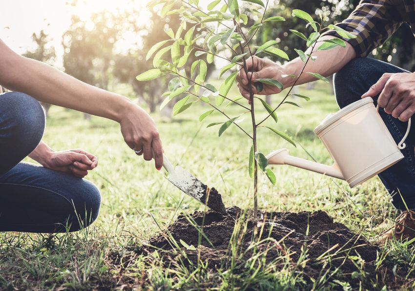 plantation conseils