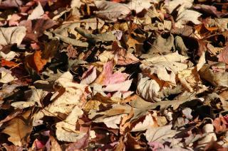 utilisation feuilles mortes