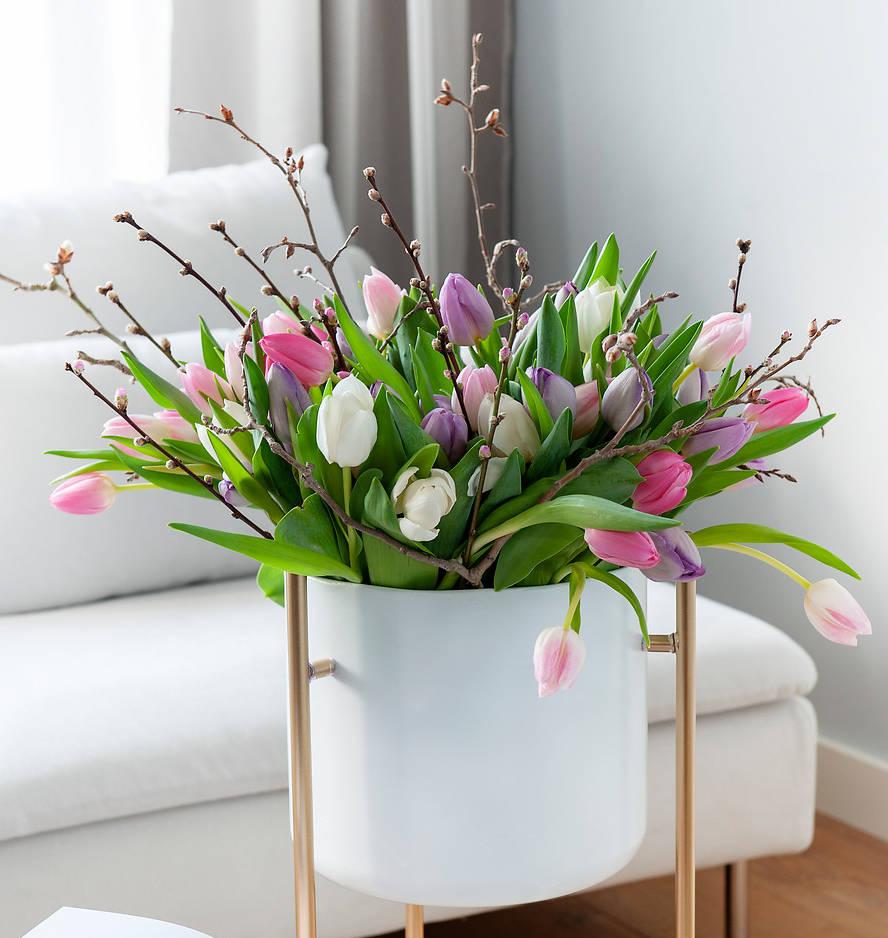 Doit On Deterrer Les Oignons De Tulipes tulipe : plantation et entretien pour une belle floraison