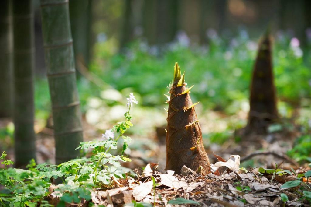 Bambou envahissant solution