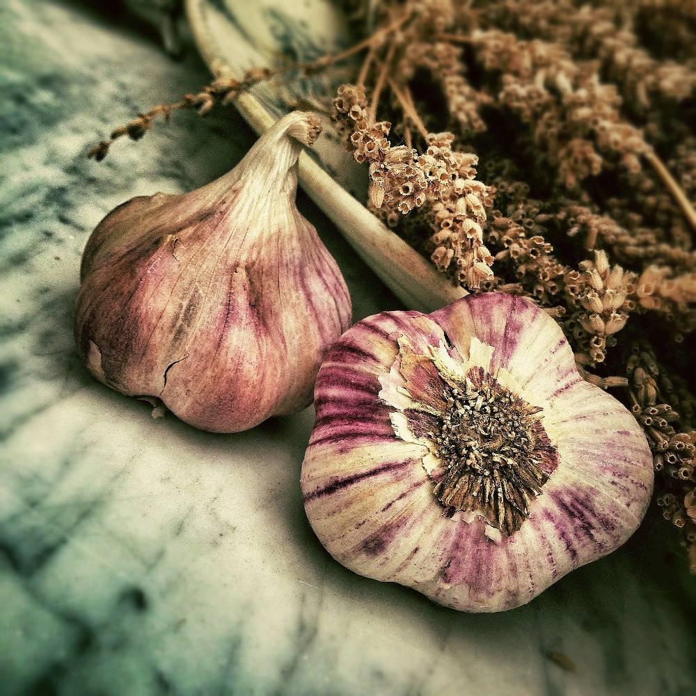 Furoncle plante traitement naturel
