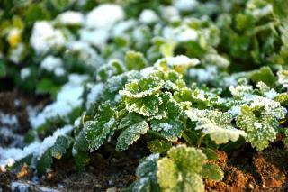 Travaux jardinage janvier