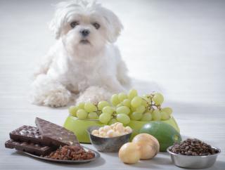aliment a ne pas donner au chien toxique