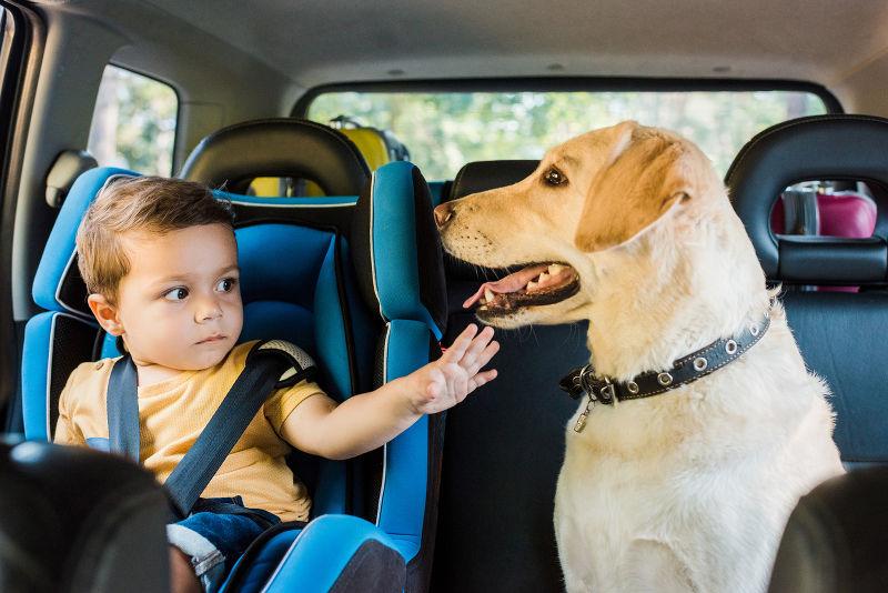 chien voiture reglementation