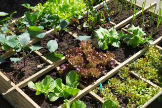 Semis plantation printemps potager legume