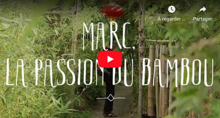 bambou pepiniere bambouseraie
