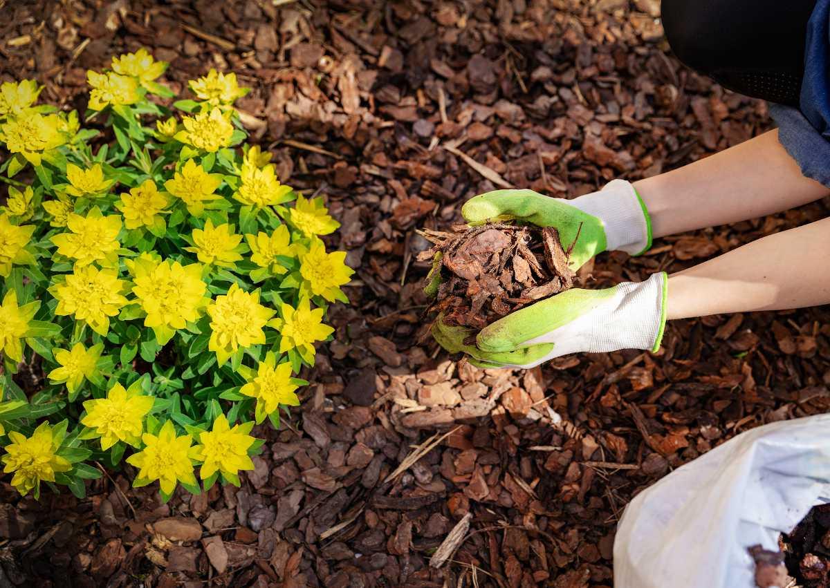 choisir paillage jardin potager plante