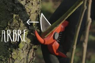 conseil pour la taille des arbre arbuste