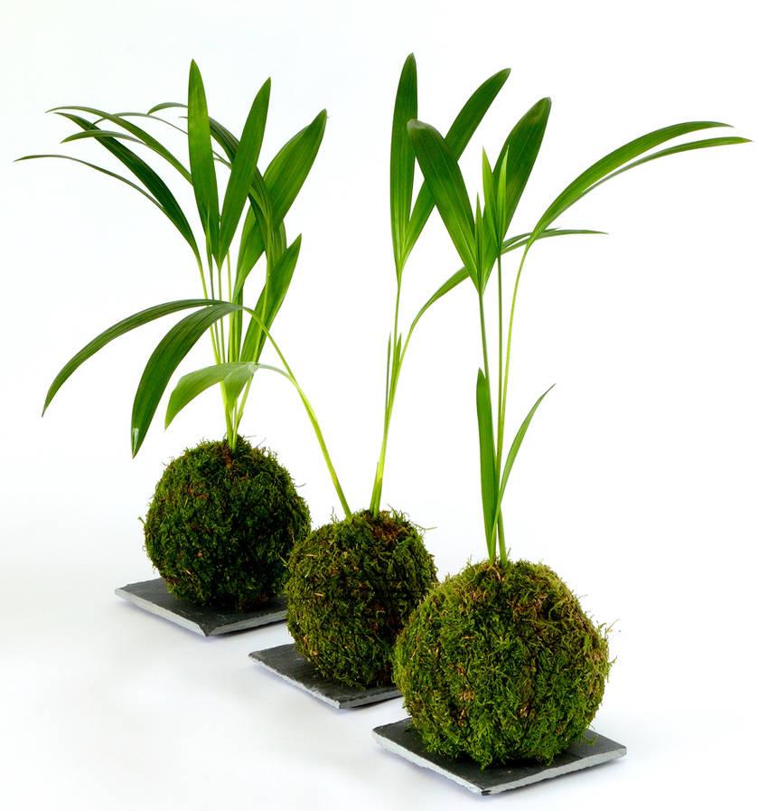 idee plante kokedama