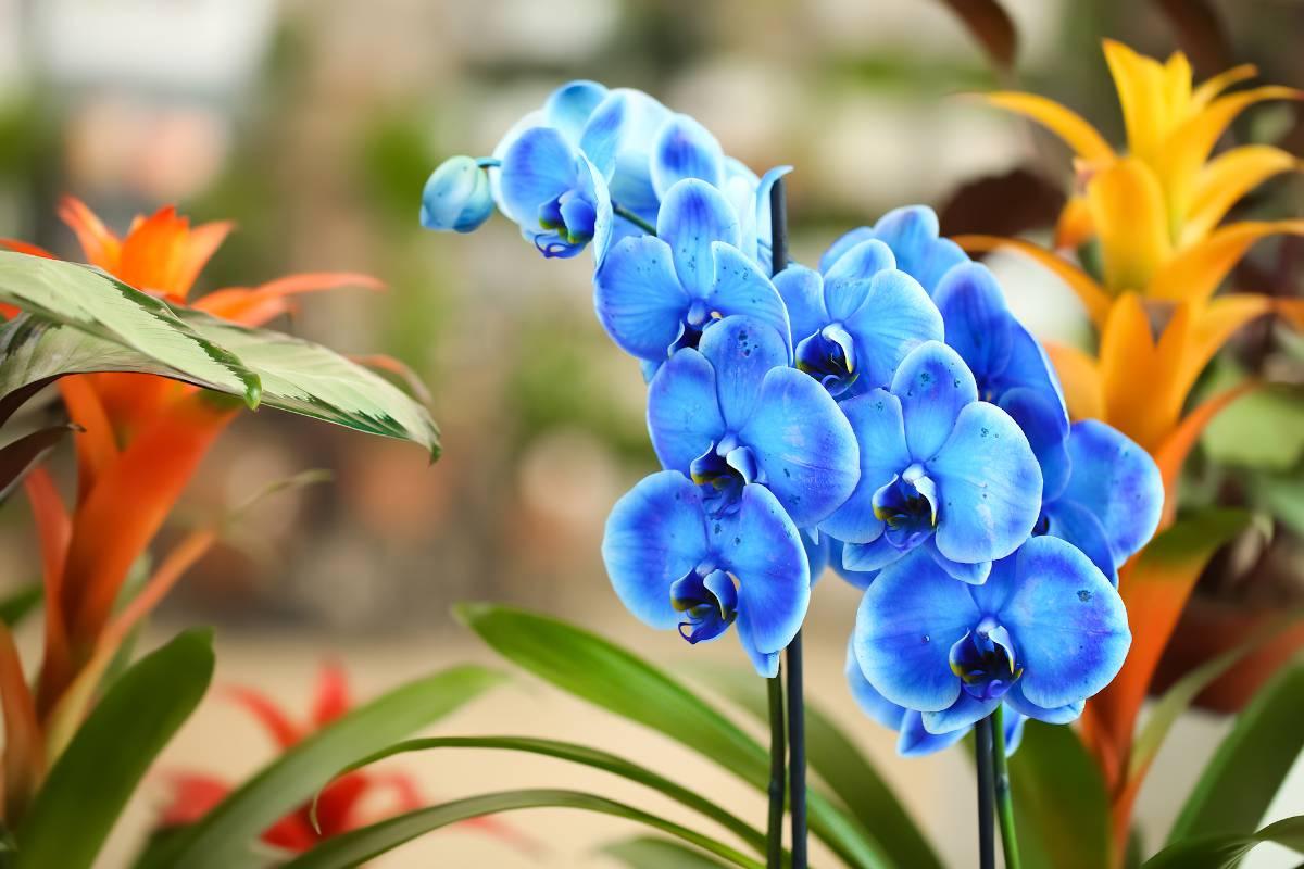 plante interieur floraison hiver hivernale