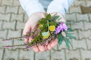 activite enfant herbier