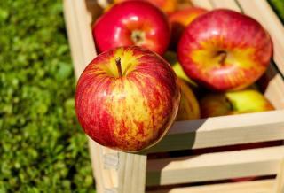 apport nutritionnel pomme bienfaits