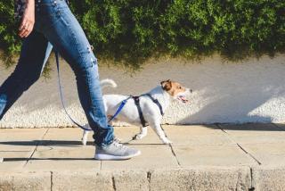 ballade chien coronavirus autorise