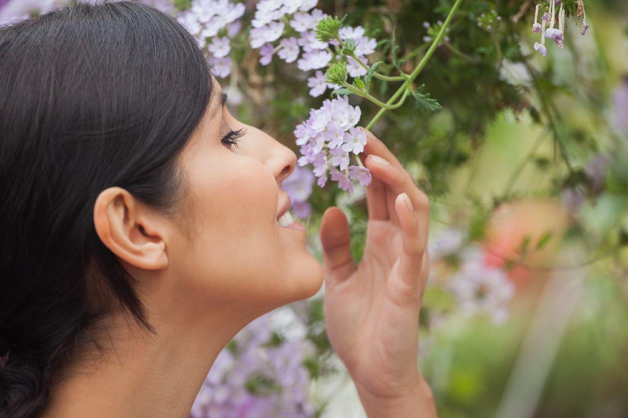 plantes et fleur parfume
