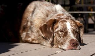 temps sommeil normal chien