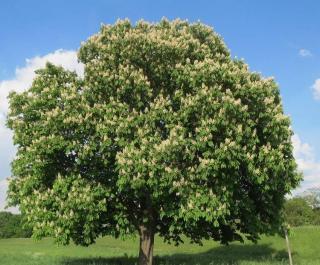 Amenager grand jardin arbres