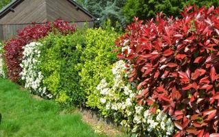 Haie variee arbuste