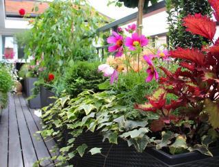 Plantes en pot pour balcon terrasse