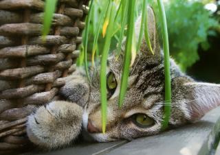 Chat joue avec une plante toxique