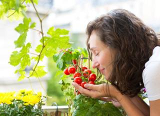 cultiver tomate en pot