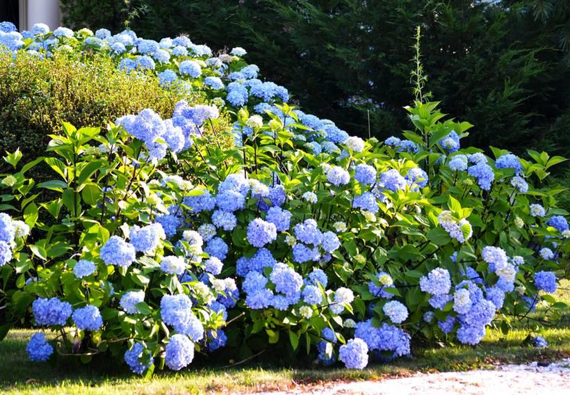 faire un jardin bleu