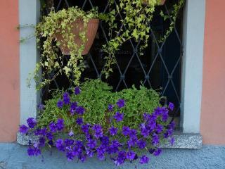 fleur et feuillage Rebord de fenetre