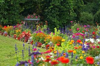 jardin et massif colore