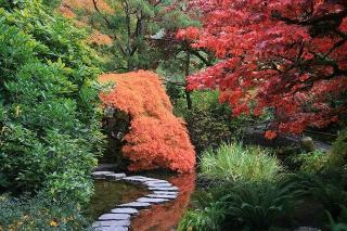 jardin japonais pas et allee