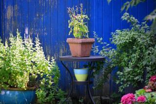 jardin original couleur mur