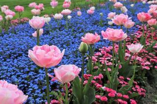 massif avec des fleurs toute annee