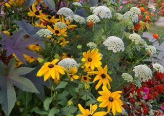 Fleurs pour mixed border