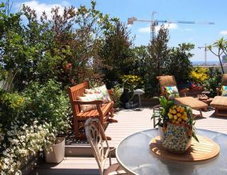 plante haute toit terrasse - brise-vue
