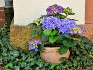 plantes pour cour ombre