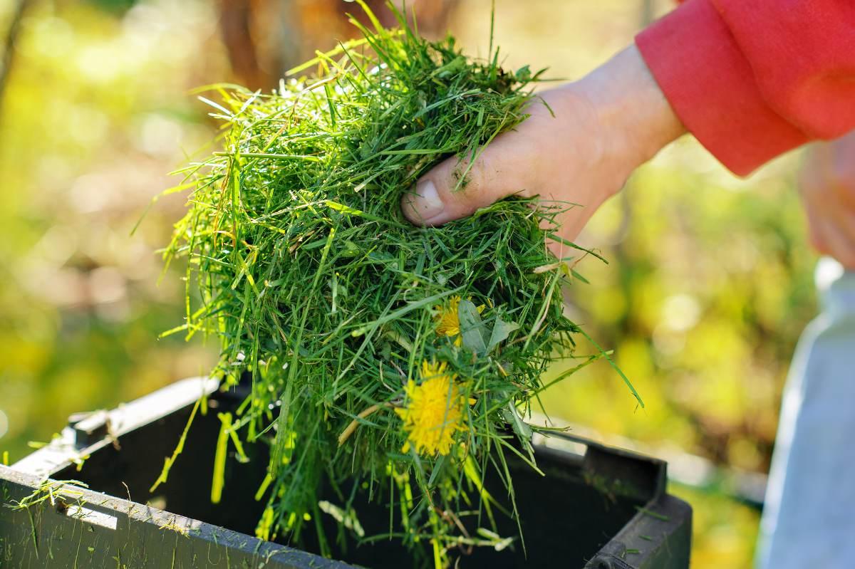 Dechet tonte - hebre coupee - compost